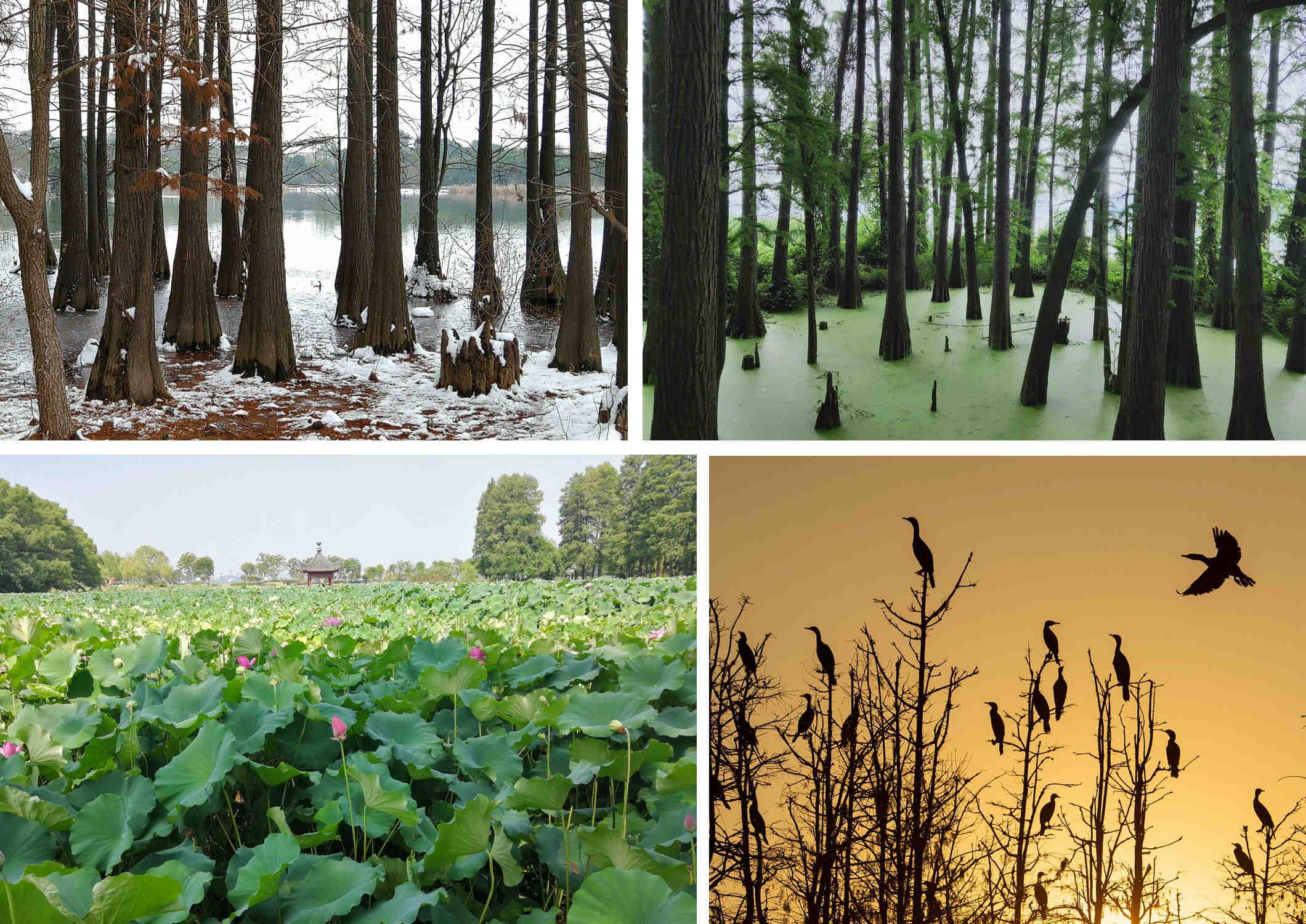 東湖生態受到有意識的保護。