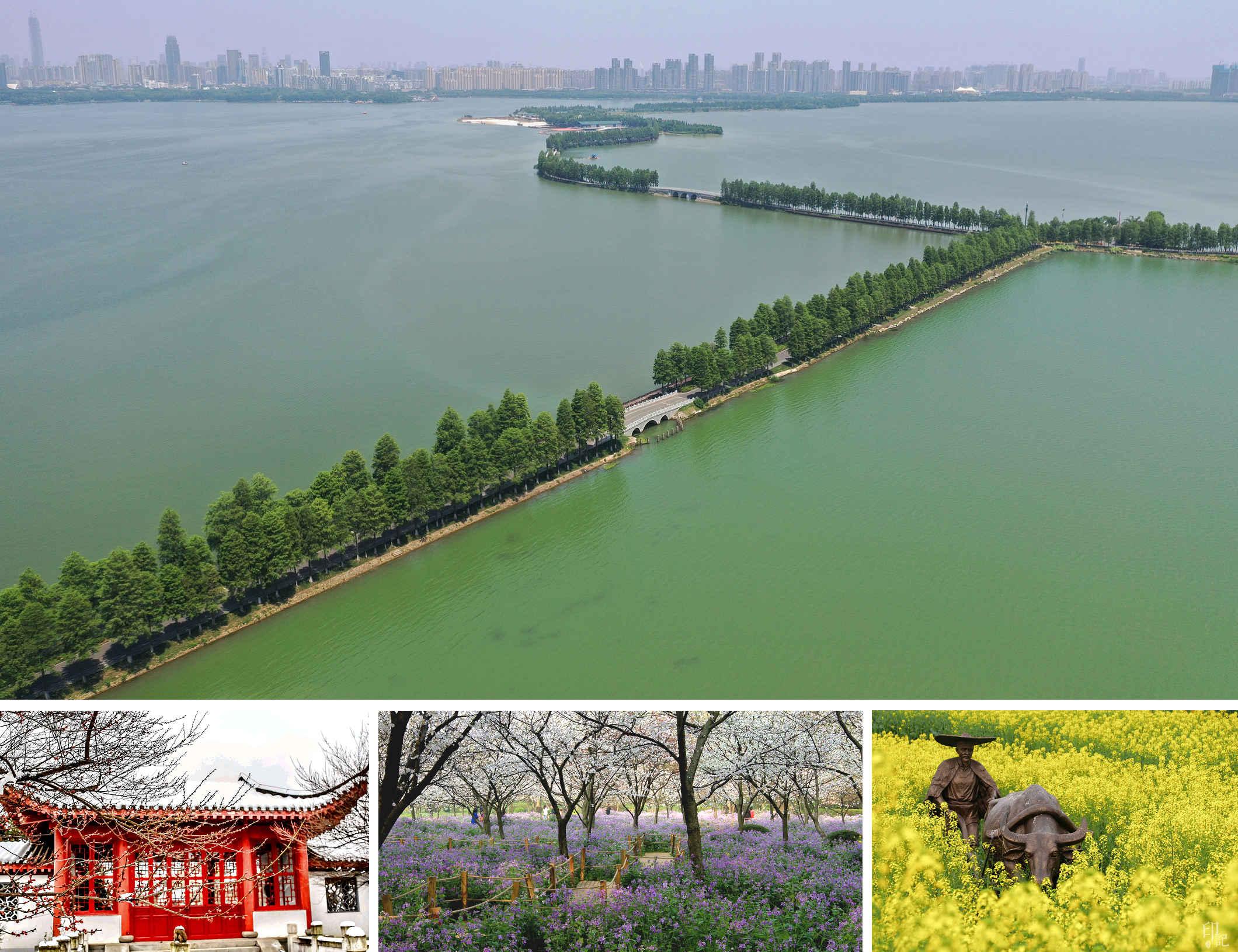 往年,東湖春花陸續開放,湖畔即見賞花遊人如織。